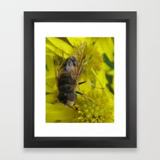Wellow wasp Framed Art Print