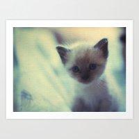 1972 Kittens Art Print
