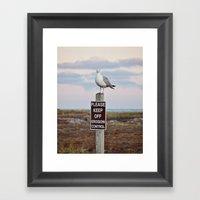 Gulls Can't Read Framed Art Print