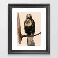 Rough-legged Hawk Framed Art Print