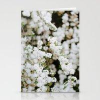 Bridal Veil Stationery Cards