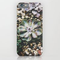 iPhone & iPod Case featuring Succulent by norakathleen
