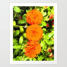 Pop Art Flowers Art Print