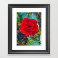 Red Rose II Framed Art Print