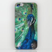 Let Me See Your Peacock iPhone & iPod Skin