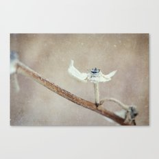 Pulled Apart Canvas Print