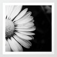 Black and White Flower Macro photography monochromatic photo Art Print