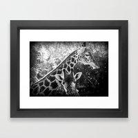 two giraffes Framed Art Print