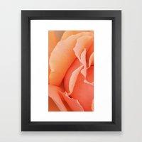 Painted Rose Petal Framed Art Print