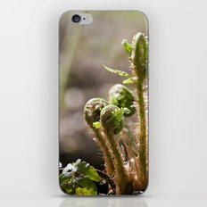 Young Ferns iPhone & iPod Skin