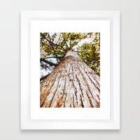 Upwards Tree Photograph … Framed Art Print