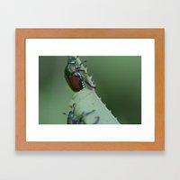 Beetle Bugs Framed Art Print