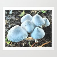 Mushrooms Mushrooms Everywhere 2 Art Print