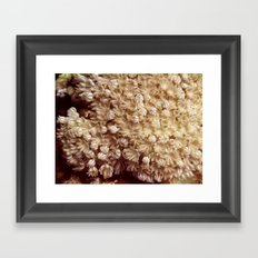 Xenia Coral Pulsing Framed Art Print