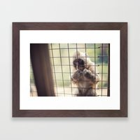 Arashiyama Monkey Framed Art Print