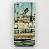 Grey Gull iPhone & iPod Skin