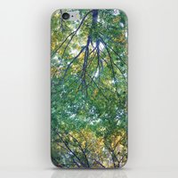 Forest 013 iPhone & iPod Skin