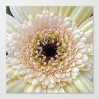 gerbera bloom IV Canvas Print