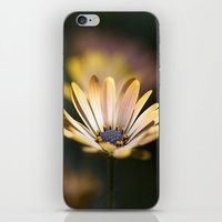 daisies in a row. iPhone & iPod Skin