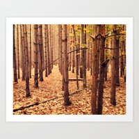 A Cathedral of Trees Art Print
