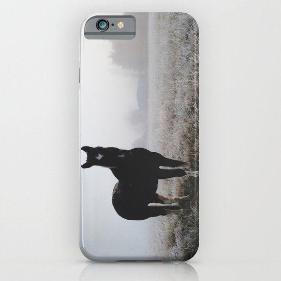 Frosty Klamath Horse iPhone & iPod Case