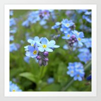 forget-me-not flowers II Art Print