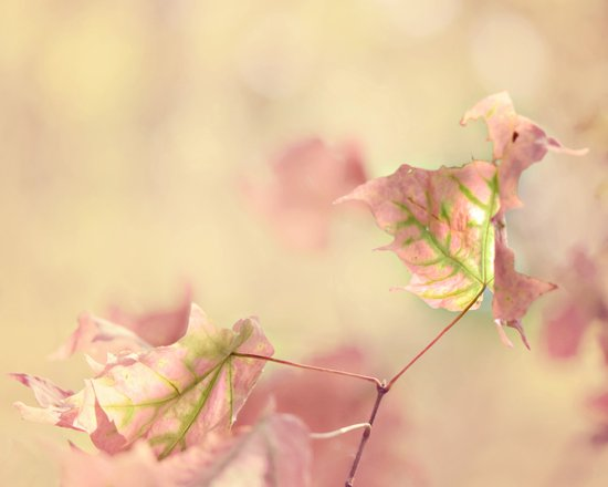 pink fall leaves Art Print