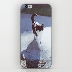 alley cat iPhone & iPod Skin