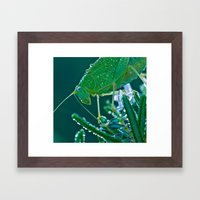 Dew-Covered Grasshopper … Framed Art Print