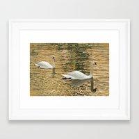 SWANLIGHT Framed Art Print