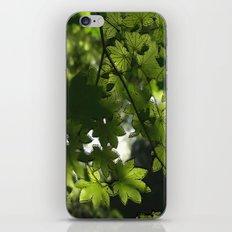Leaf It To Me.  iPhone & iPod Skin