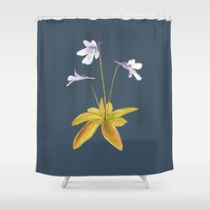 Butterwort - Pinguicula macroceras Shower Curtain