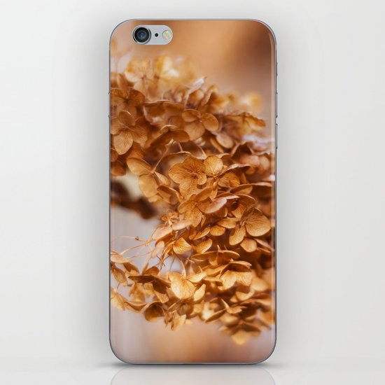 Winter Hydrangea iPhone & iPod Skin