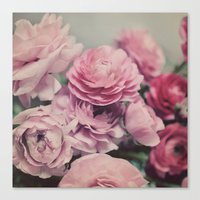 quiet ranunculus Canvas Print