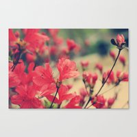 One in a Million Canvas Print