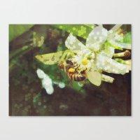 Honey Bee: Emerald Canvas Print