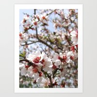 Pink Tree Blossom Art Print