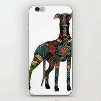 greyhound white iPhone & iPod Skin