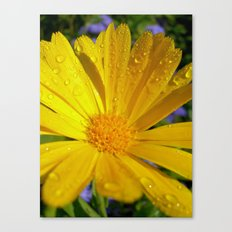 yellow marigold Canvas Print