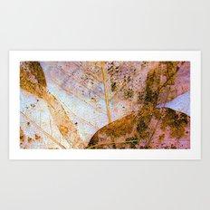 Leaf Skeletons Art Print