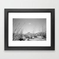 California Ocotillo Framed Art Print