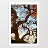 Purple Japanese Maple Art Print