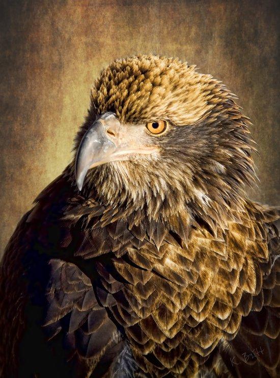 Fine Feathered Friend Art Print
