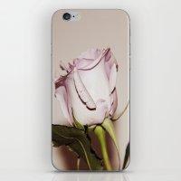 Last Rose iPhone & iPod Skin