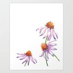 Watercolor Purple Cone Flower Art Print