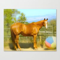 A Horse and Her Ball Canvas Print