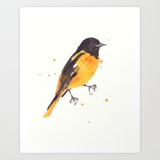 Baltimore Oriole, Bird paintings, black and orange, american birds, ornithologist pillow Art Print
