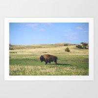 Badland Bison Art Print