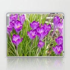 Spring crocus  Laptop & iPad Skin