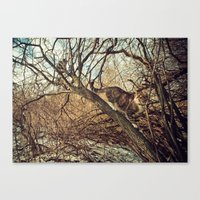 January cats Canvas Print